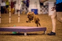 NRG World Series of Dog Sports 2015